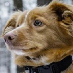 Телеграмм канал «Cute dogs